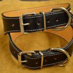 collar de perro de cuero personalizable